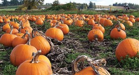 The 2 Best Spots for Pumpkins in San Diego #jackolanterns